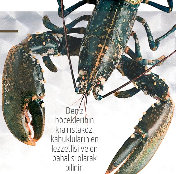 kabuklular-4